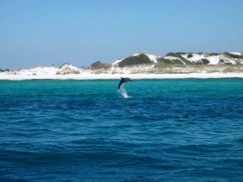 Dolphin Cruises In Destin Florida 01