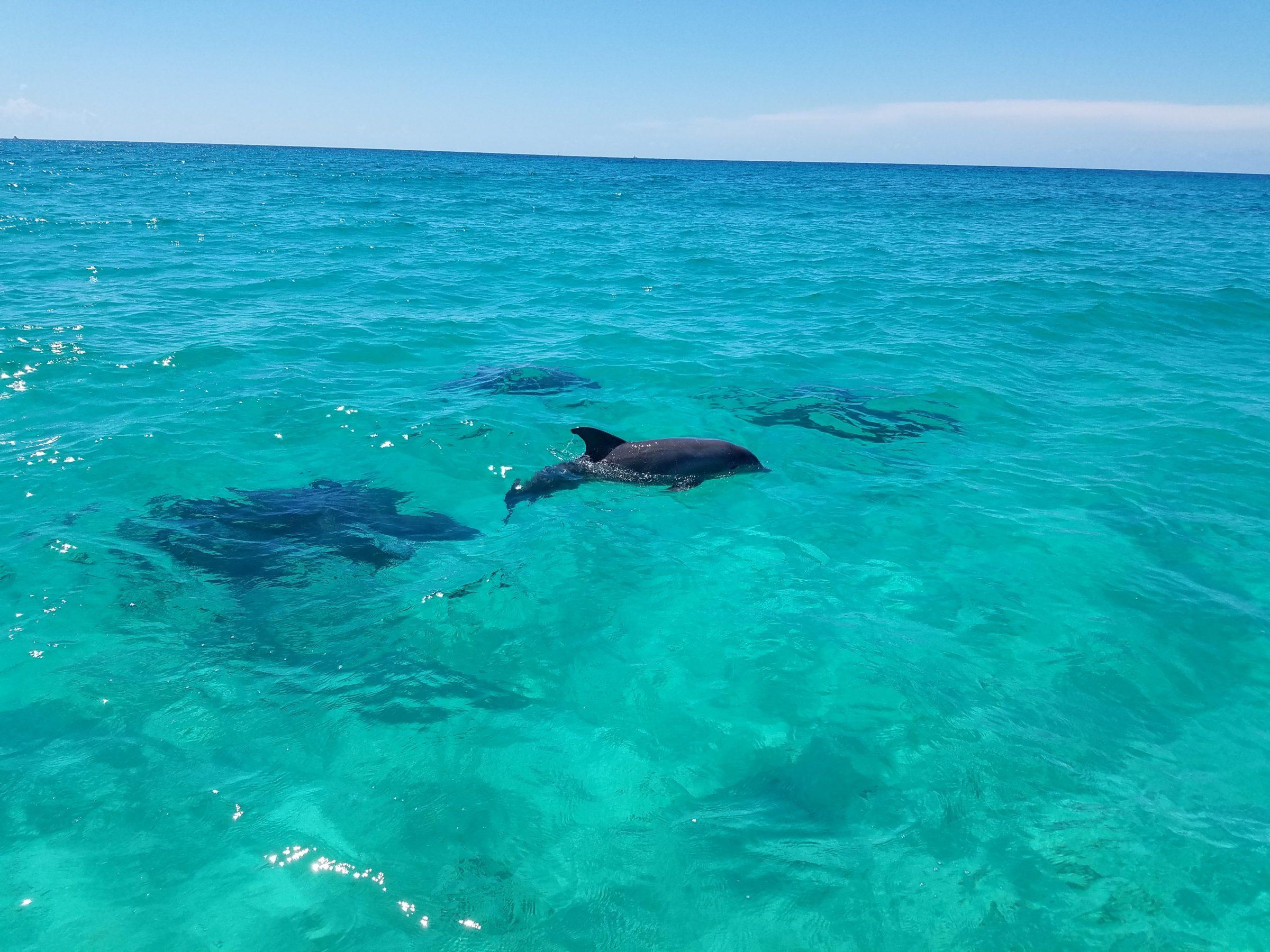 Destin Summer 2017 - Dolphin Cruises Aboard Our Catamaran Featured Image