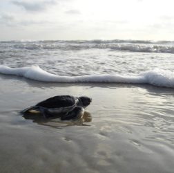 Smile N Wave Sailing Adventures - Featured Image for Sea Turtle Migration
