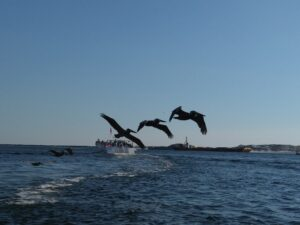 The Best Dolphin Tour In Destin Florida Pic 001