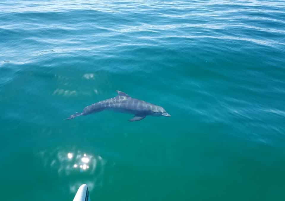 The Best Dolphin Tour In Destin Florida Featured Image
